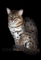R S Cat
